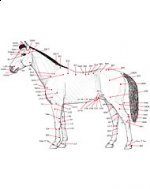 Horse Treatment Book - EquiHealth
